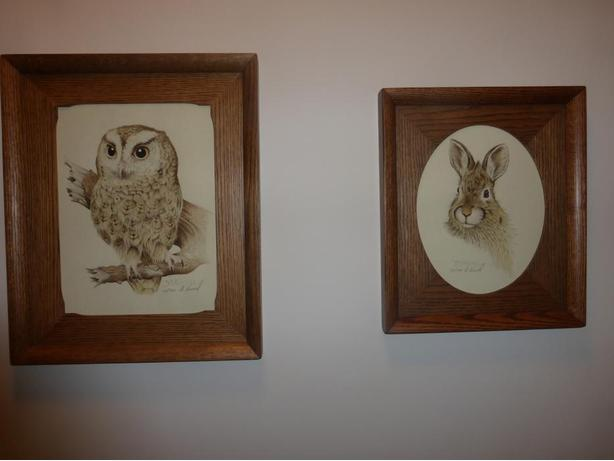 Owl and Rabbit Pictures