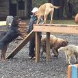 Island Canine Care