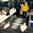 Ucluelet Charter | Guided Salmon, Halibut & Cod Fishing Charters