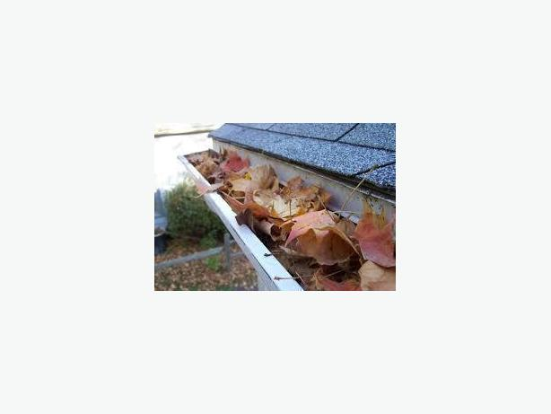 Gutter Cleaning, Moss Removal & More