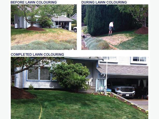 Lawn Painting - Parkesville - Qualicum - Green Grass - Green Lawn