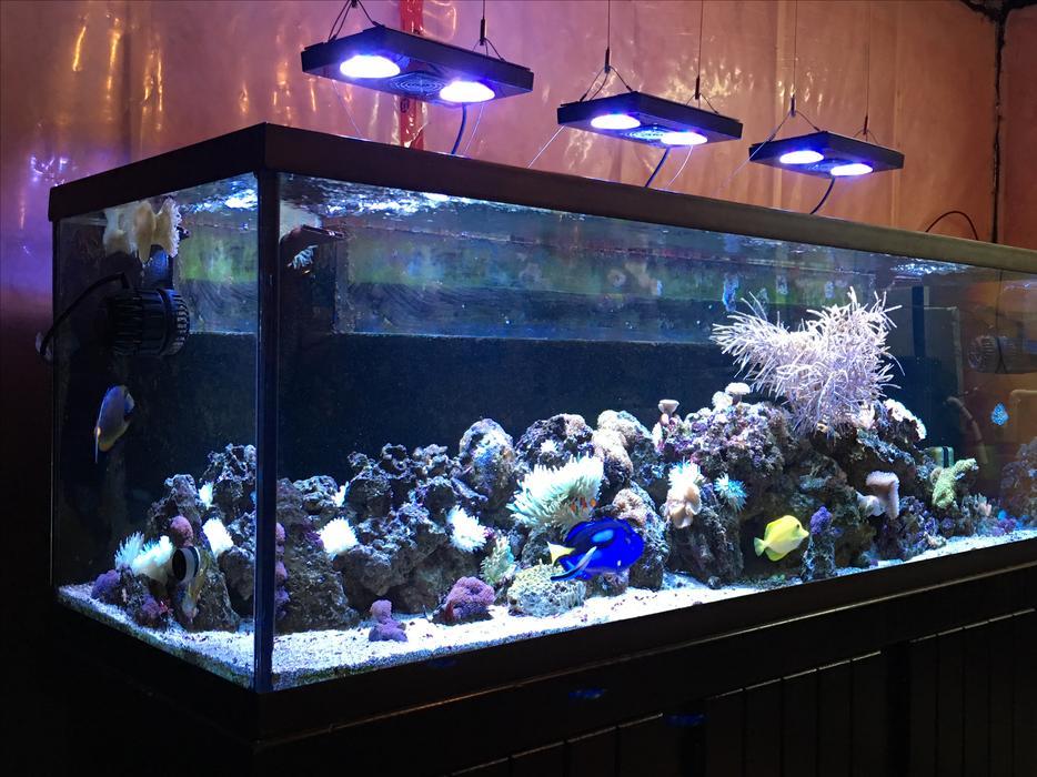 180 Gallon Complete Saltwater Aquarium North Regina Regina