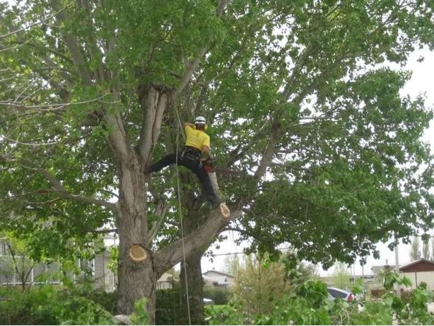 Professional Tree Services