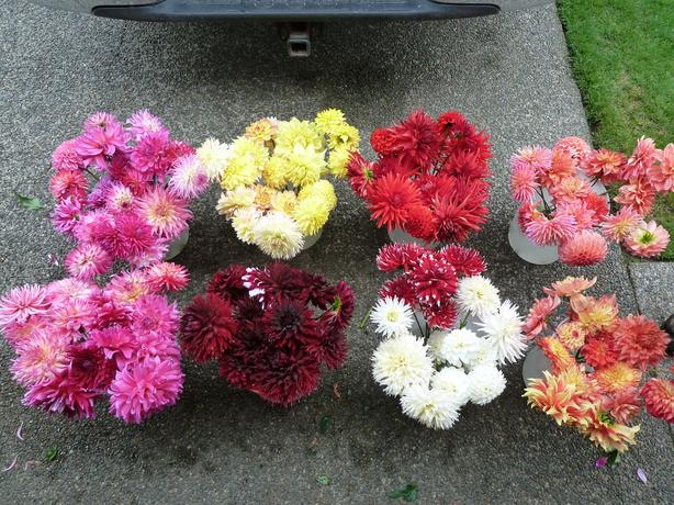 Kitchener Perennial Sale