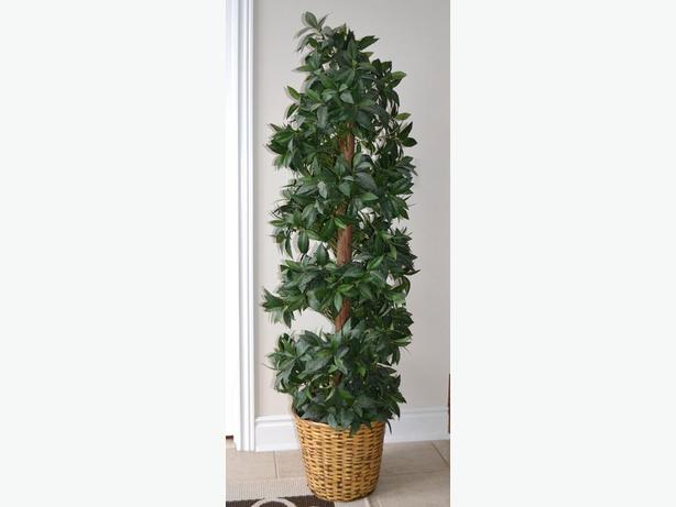"really nice silk planter 67""high"