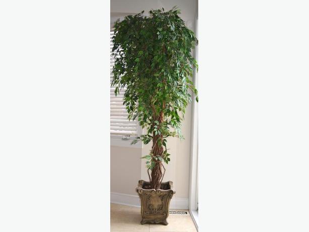 "Really nice silk birch tree 87"" High"