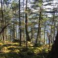 4.6 acres of Waterfront Thetis Island
