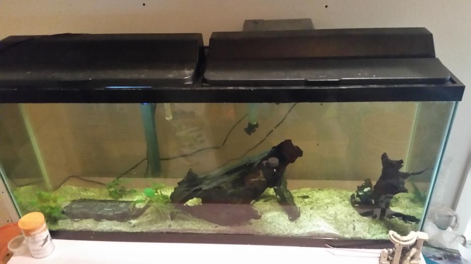 55 gallon aquarium complete setup north regina regina for 55 gallon fish tank setup