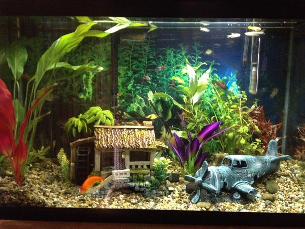 30 gallon fish tank with everything plus more north for 30 gallon fish tank
