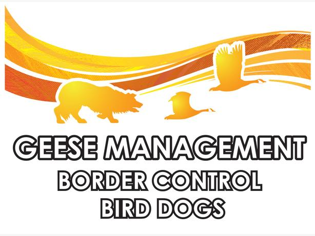 Border Control Bird Dogs - Geese Management