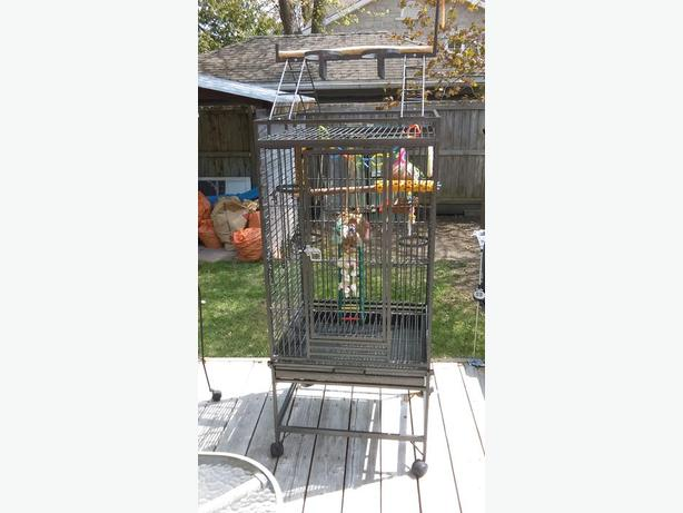 Big Parrot cage + accessories and toys