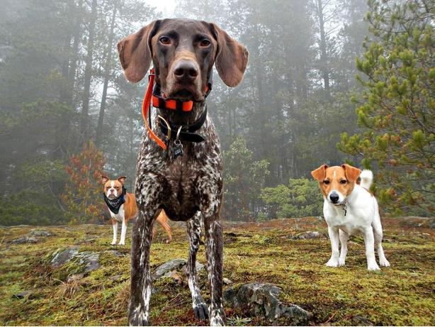 Adventure Camp for Dogs