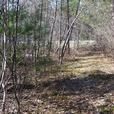 Great sized lot for sale in Alfred Township! Buy Land today.