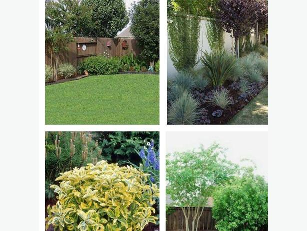 WANTED: Trees / Shrubs Flowers