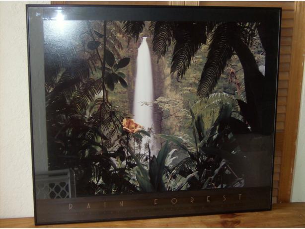 Black Framed Rain Forest Poster