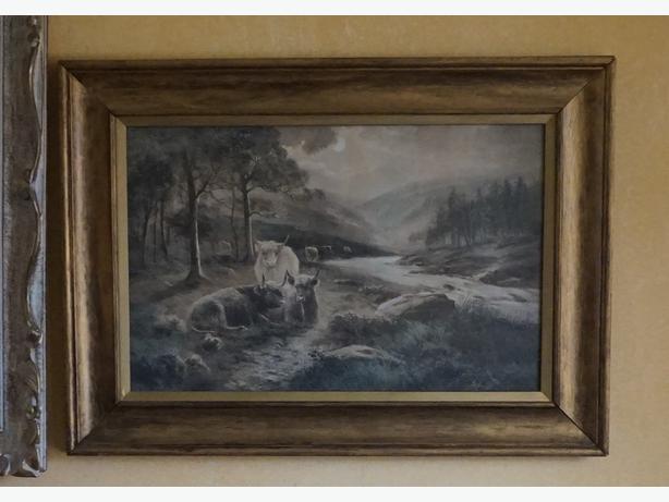 4u2c ANTIQUE PRINT, SCOTLAND, HIGHLAND CATTLE BY DOUGLAS GRAHAM