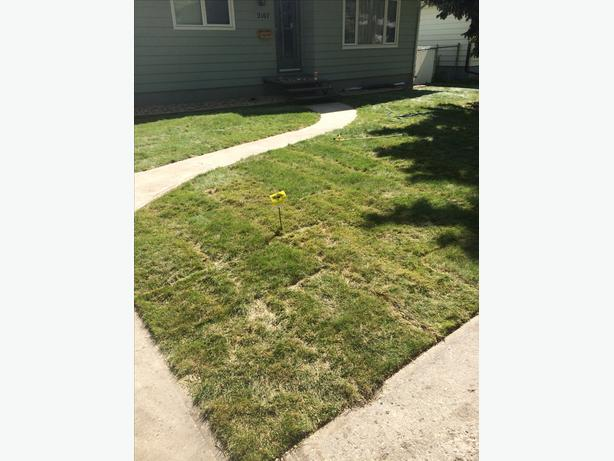 Mowing, Yard, and Eavestrough Clean-up
