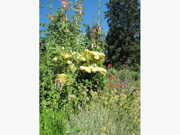 Experienced Organic Gardener Available