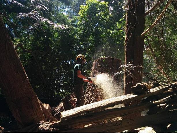 Gabriola Island Tree Services