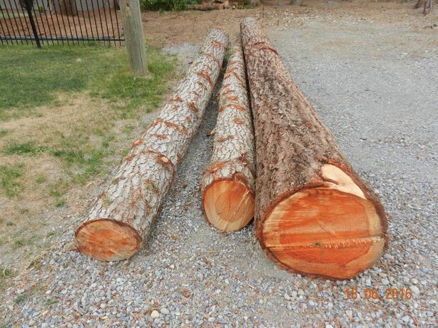 Cedar and Fir