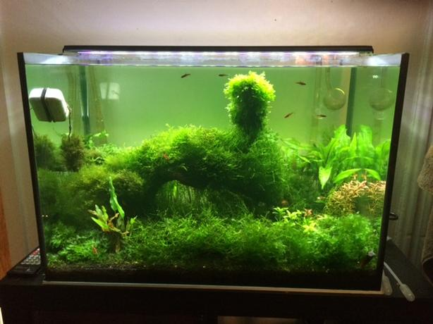 21gal planted low maintenance tank central ottawa inside for Low maintenance fish tank