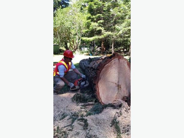 FOR TRADE: TREE AND FORESTRY SPECIALIST
