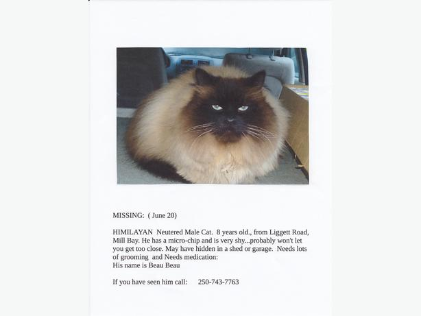 LOST    Blue eyed Himalayn Male cat/  Liggett Rd. Mill Bay