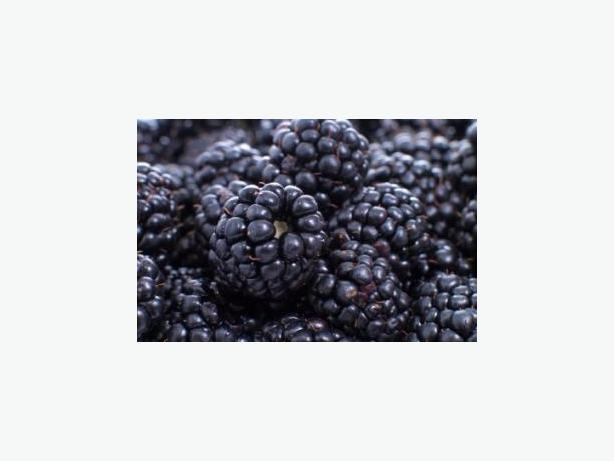 Ripe Blackberries and Italian Prune Plums