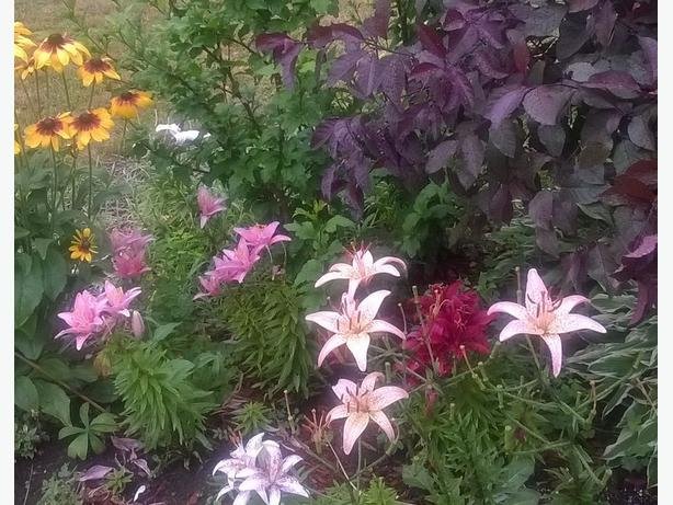 Beautiful perennials for a low maintenance garden kanata for Hearty low maintenance plants