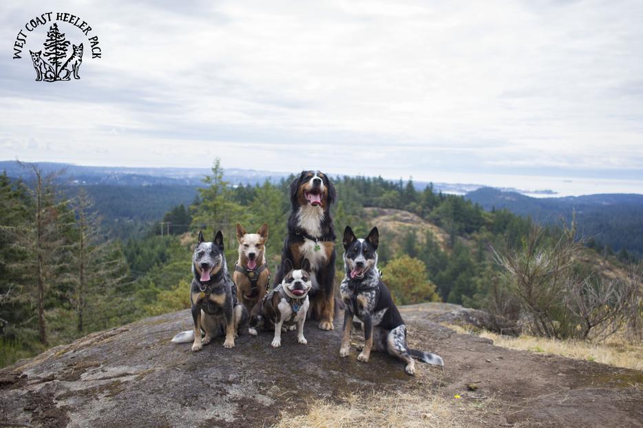 Dog Walker Edmonton