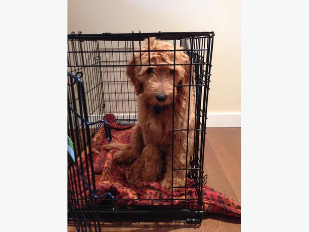 Top Paw Double Door Dog Crate Saanich Victoria