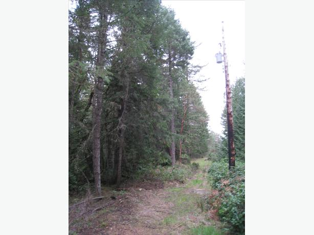 2.31 Acres with Ocean Glimpses & Rustic Cabin (Thetis Island)