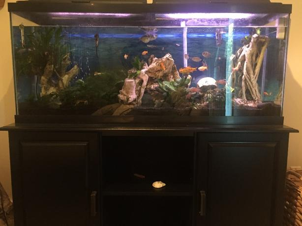 Marineland 55 gallon fish tank sooke victoria for 55 gal fish tank stand