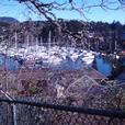 Building Lot for Sale in Beautiful Brentwood Bay,Victoria.B.C.