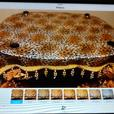 Cheetah Print Canopy Bed