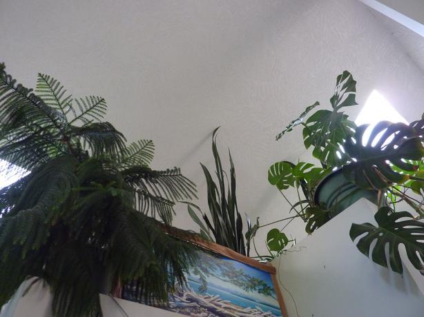 beautiful house plants for sale victoria city victoria