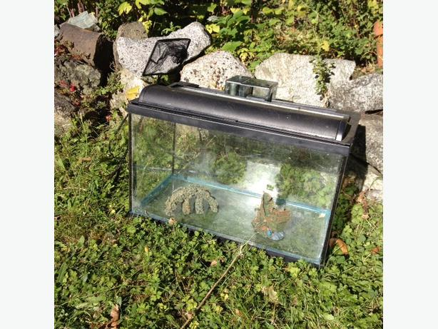 10 gallon fish tank and filter ready for fish victoria for How to clean a 10 gallon fish tank