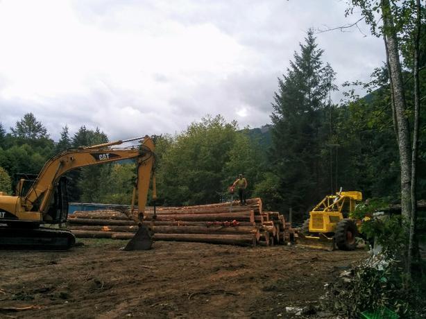 Logging & Tree Service's, Wild Fire prevention