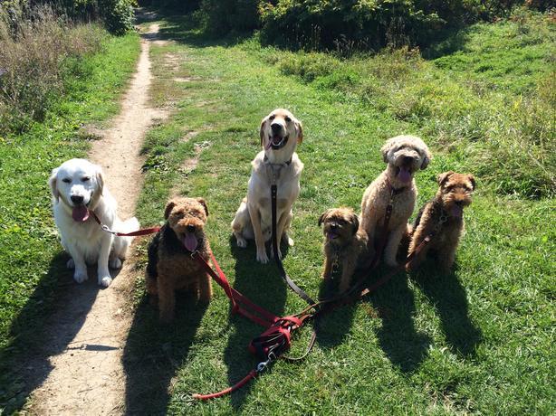 Dog walking, hikes, pet care, pee/pooh breaks, pet medications!