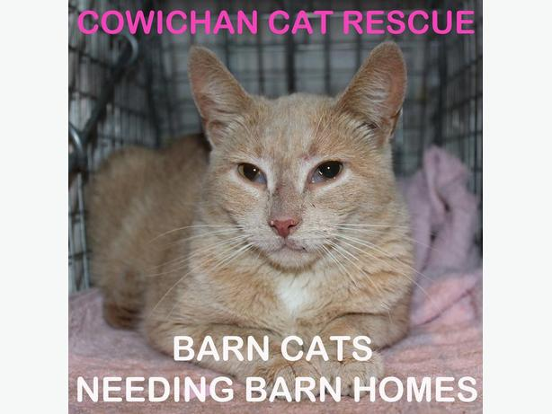 Cowichan Cat Rescue - Barn Cat Program