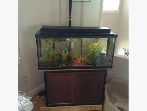 Aquarium & Stand
