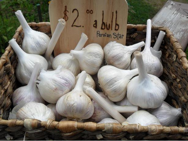 GARLIC..... The Stinking Rose For Sale!