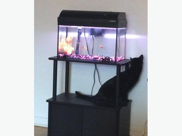 10 GALLON FISH TANK+STAND+ACCESSORIES