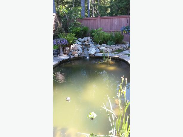 Outdoor pond fish and plants