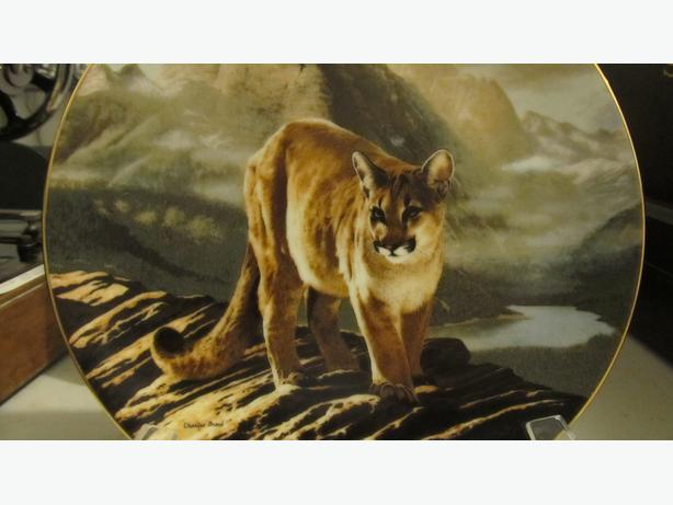 COUGAR COLLECTOR PLATE