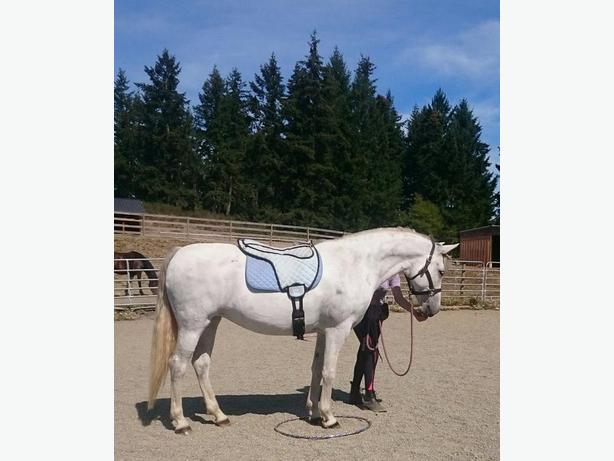 Spirit Gate Farm Fall Horsemanship and Riding Program