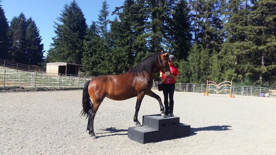 Horsemanship Vancouver Island
