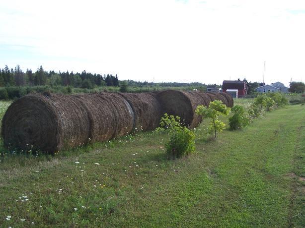 Round Bales of Hay 2016 Crop - $12.99 each