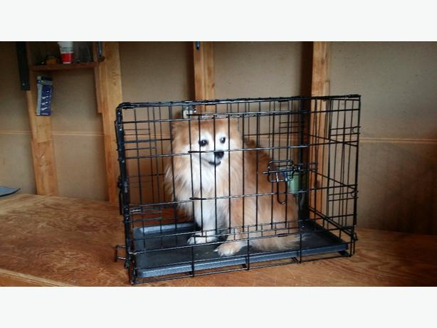 Small Collapsible Wire Pet Crate