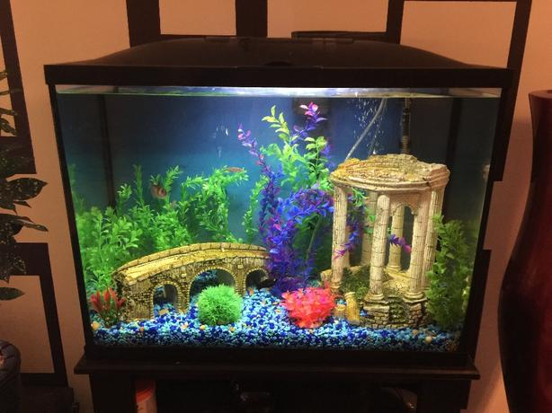 37 gallon aquarium fish tank plus stand south regina regina